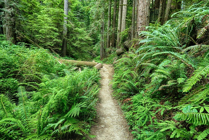 Russian Gluch State park trail