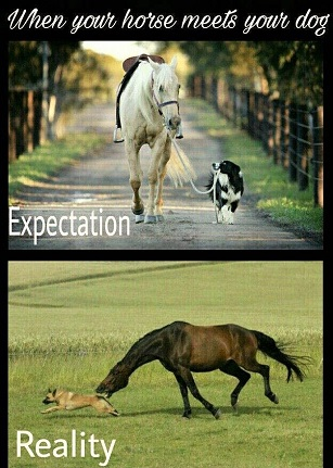 When a horse meets your dog expectations