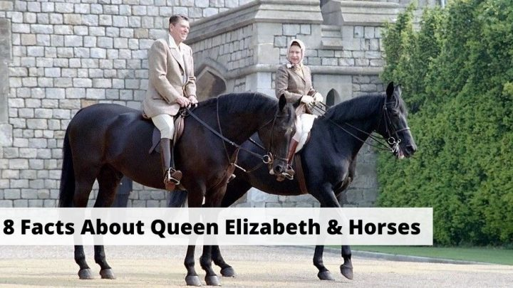 Facts about Queen Elizabeth and horses. Horse racing, breeding, and horse riding