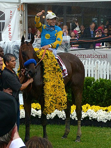 American Pharoah racehorse at the 2015 Preakness Stakes at Pimlico