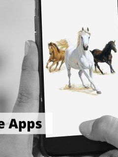 Best horse apps for equestrians