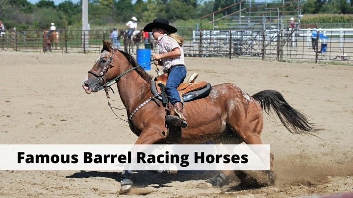 Famous Barrel Racing Horses in history