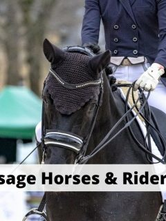 Famous Dressage Horses & Riders