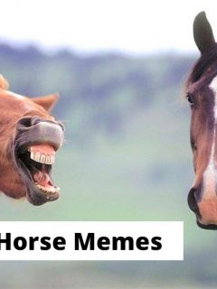 Funny horse memes equestrians will find hilarious