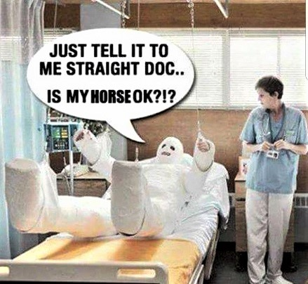 Funny horse injury memes