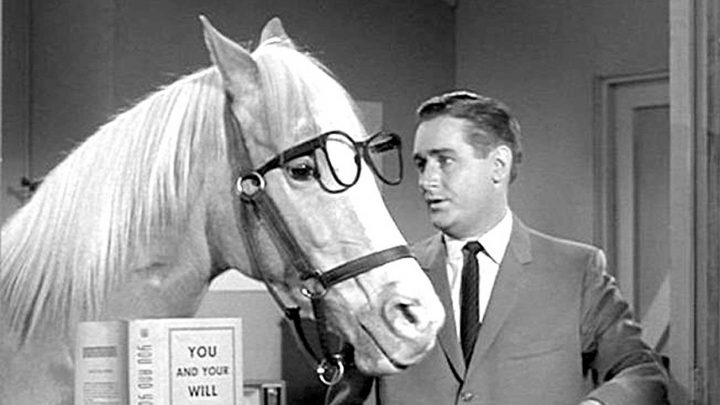Mister Ed, talking horse on the TV show Mr Ed