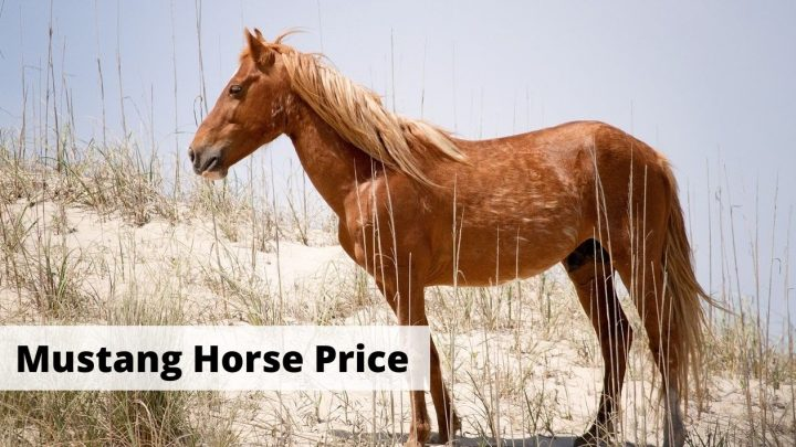 Mustang Horse Price - How much does a Mustang horse breed cost?