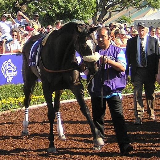 """Zenyatta in the walking ring at the 2008 Breeders' Cup, doing her """"dance"""" with a front leg"""