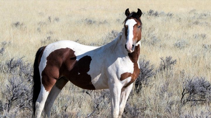 Best places in North America to see wild horses