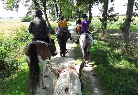 Horse riding in the countryside with new friends