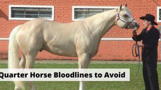 Quarter Horse Bloodlines to Avoid