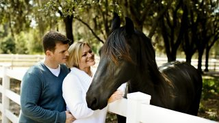 Reasons why you should own buy a horse