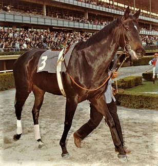 Ruffian in the Astoria Stakes at Belmont Park, 1975
