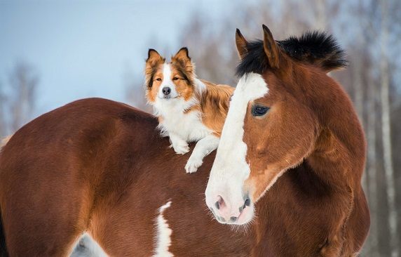 Smart horse and dog