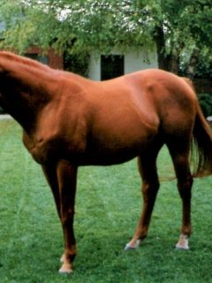 Affirmed, famous Triple Crown winning racehorse facts, stats, and history