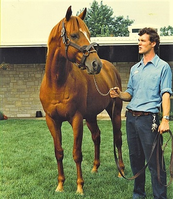 Affirmed, famous chestnut racehorse at Spendthrift Farm 1981