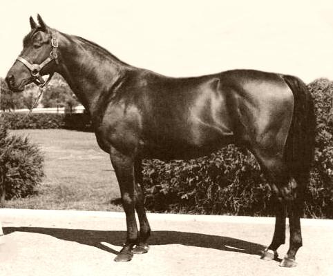 Portrait profile photo of the race horse, Citation.