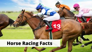 15 interesting facts about horse racing