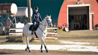 Phoenix, grey horse owned by Georgie on Heartland
