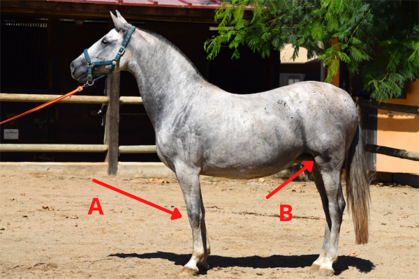 Horse knee and anatomy trivia question