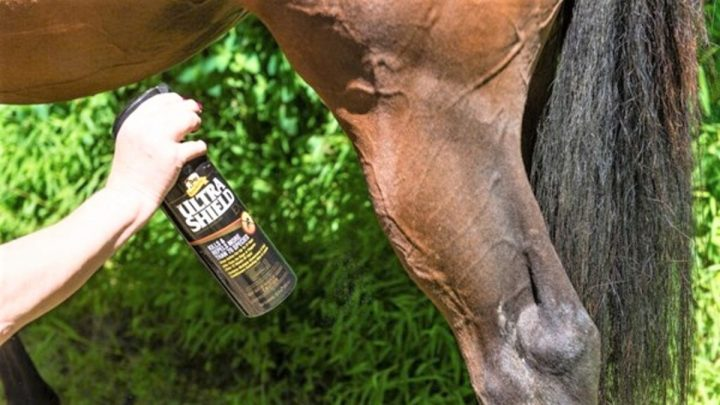 Best fly spray repellents for horses, dogs, and livestock