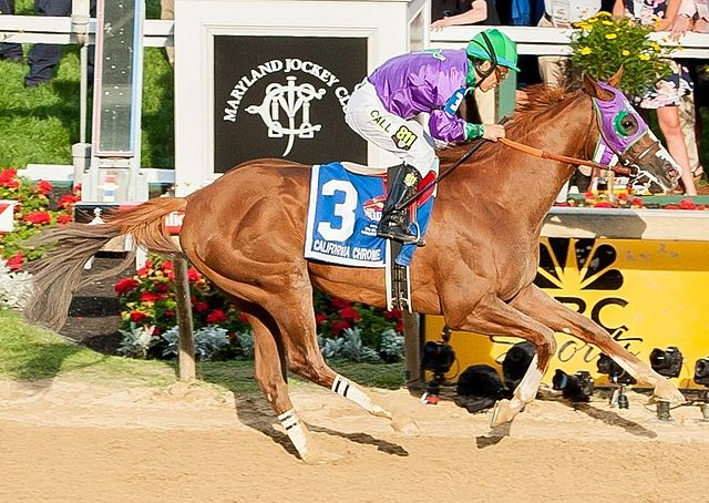 California Chrome at the 139th Preakness Stakes finish line