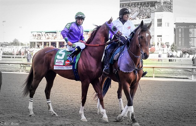 California Chrome racehorse at the end of a race