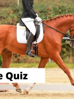 Dressage quiz for equestrians and dressage riders