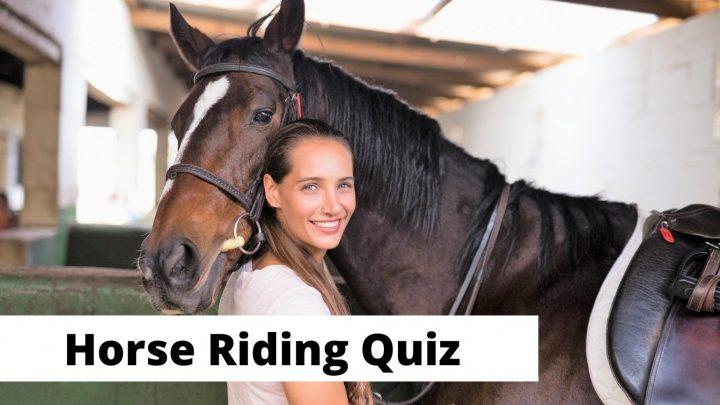 Horse riding trivia and quiz questions for equestrians