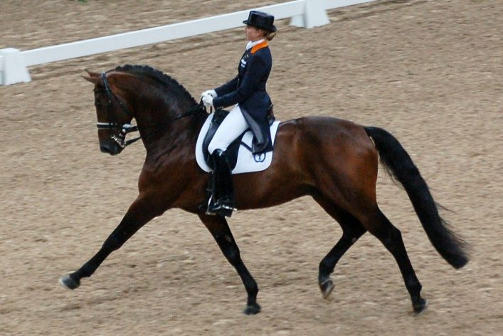 Extended trot element in dressage