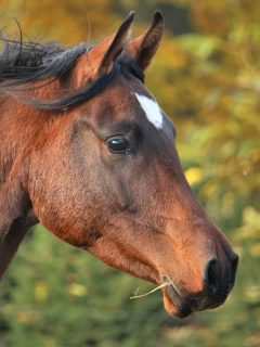 52 Thoroughbred horses need homes Facebook post meme explained