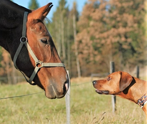 Brown horse and dog image