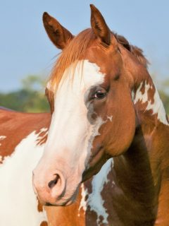 Tips on buying a new horse