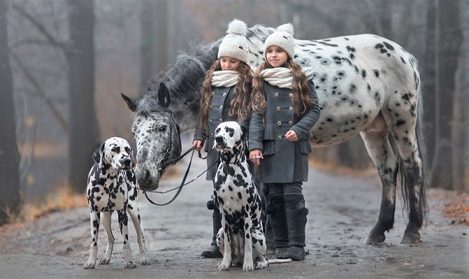 Dalmatian dogs and Appaloosa horse with two girls