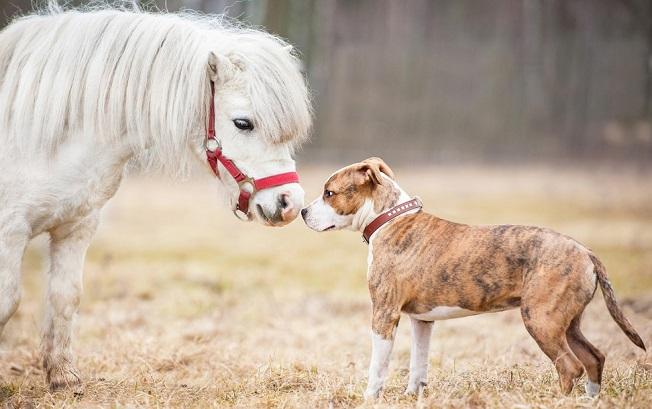 Dog and horse saying hello