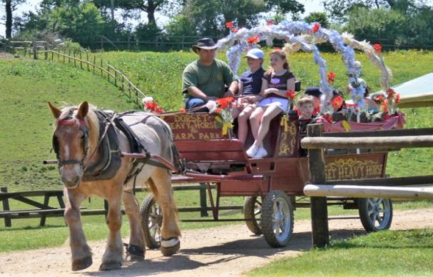 Dorset Heavy Horse Farm attraction