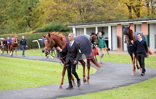 Expensive racehorses on a posh race yard