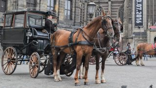 Horse-drawn carriages with horses, how fast and far can they go