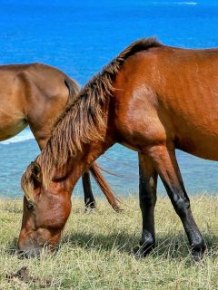 Types of horse breeds native to Japan