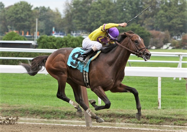 Jockey whipping a racehorse while racing