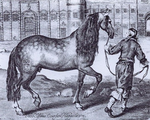 Black and white drawing of an extinct Neapolitan horse