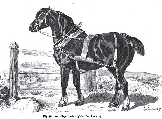 Drawing of an extinct Old English Black horse