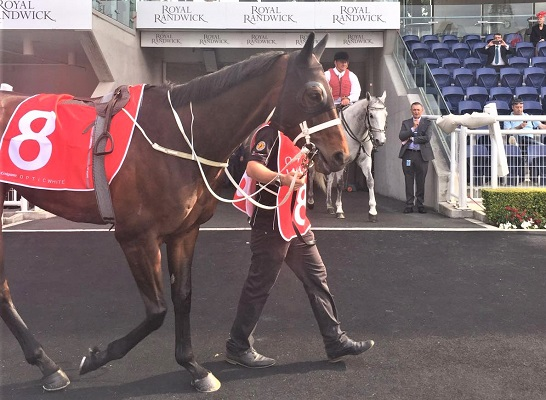 Racehorse Winx after a horse race