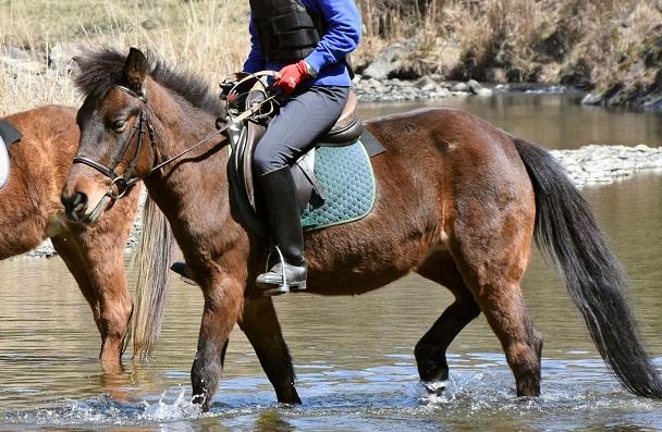 Taishu horse breed from Japan