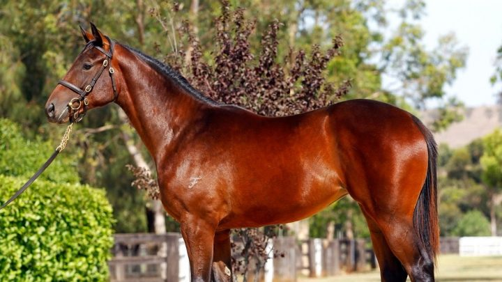 Winx, famous Australian racehorse facts, history, and stats