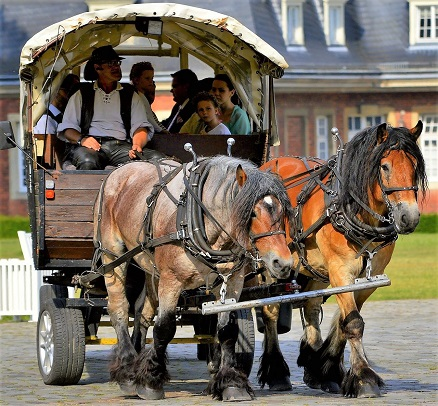 horse-drawn carriage pulled by two draft horses