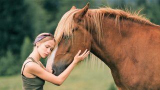 Do horses miss their owners?