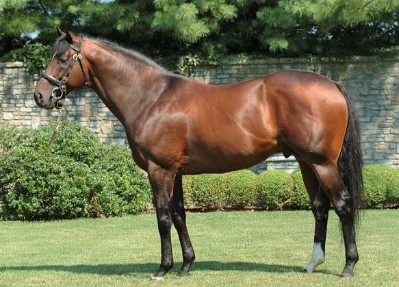Fusaichi Pegasus, most expensive Thoroughbred horse ever sold