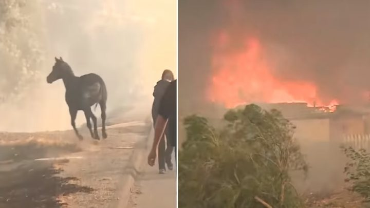 Horse runs to a burning barn to save other horses