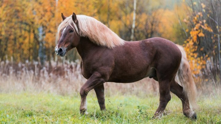 How much horsepower does a horse have